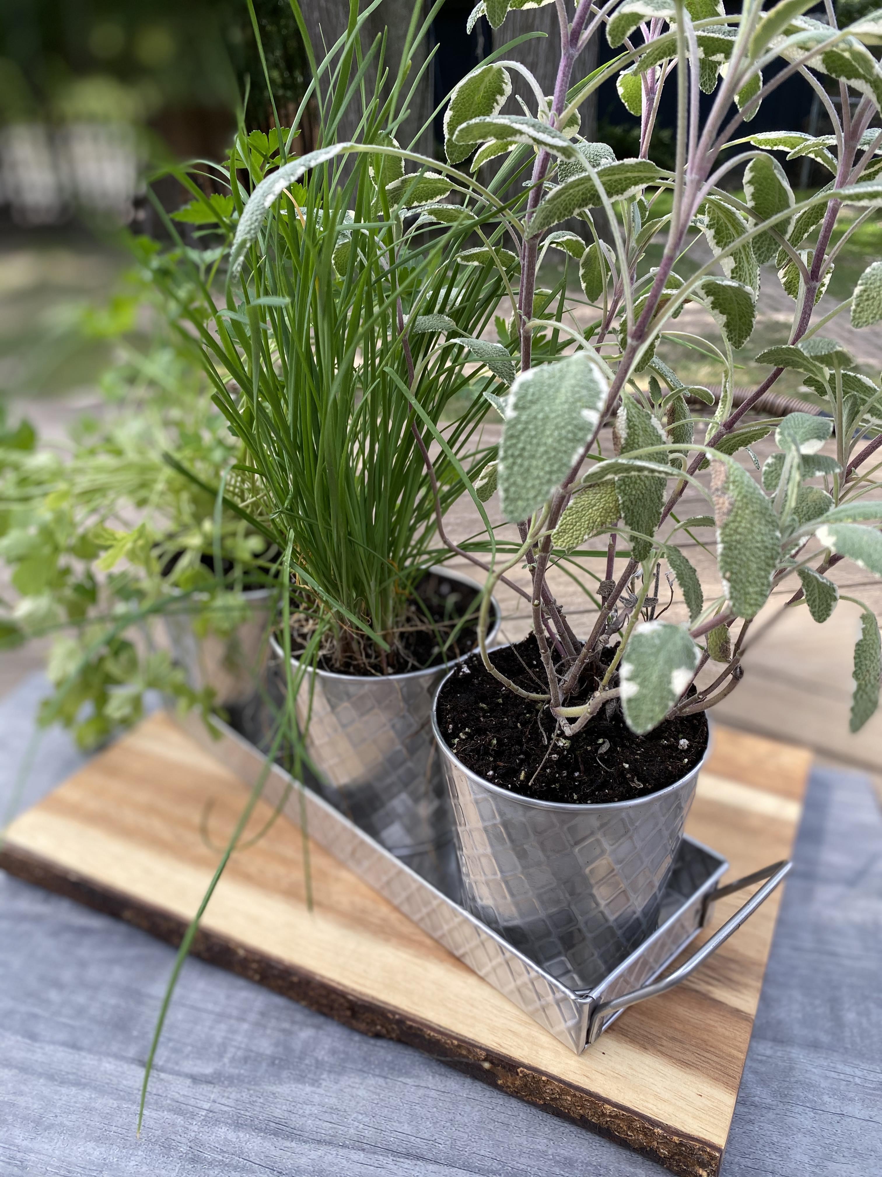 Botanicals Planter – TableCraft OSTB